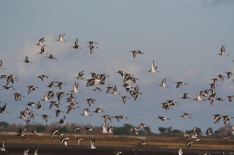 Balade aux abords de la Réserve Naturelle Nati ...