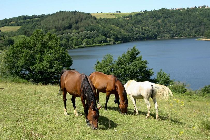 Tour du Tarn à cheval : Mont-Roc / Montredon-L ...