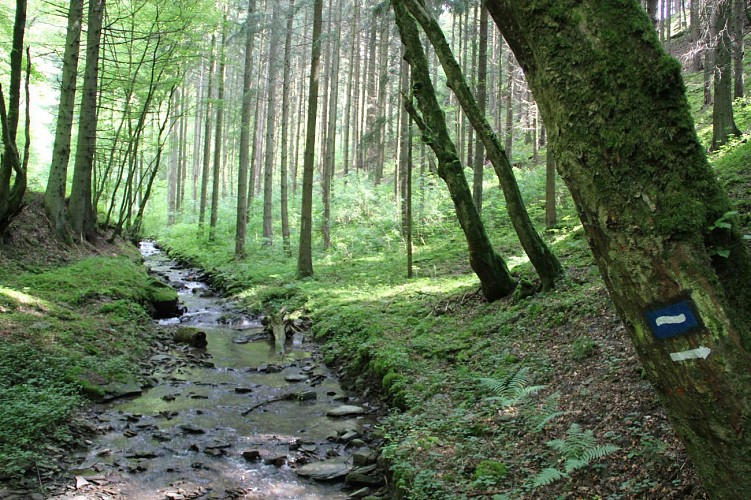 Verborgene  Landschaften - Streckenabschnitt 4 - Clervaux - Kautenbach
