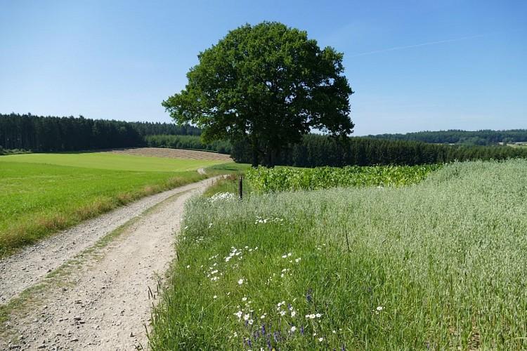 Paysages et Patrimoine, A travers champs. Variante (9 km)