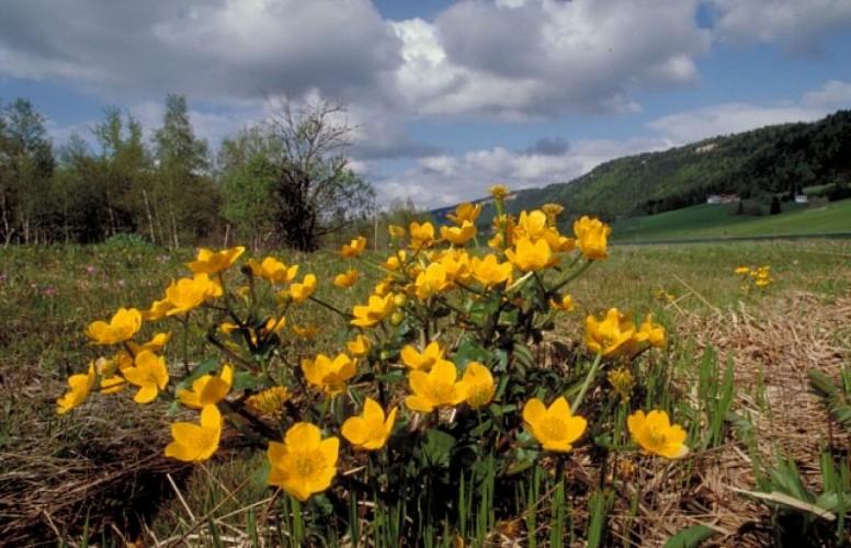 Doubs Cyclo' - La vallée de l'Ognon - Besançon
