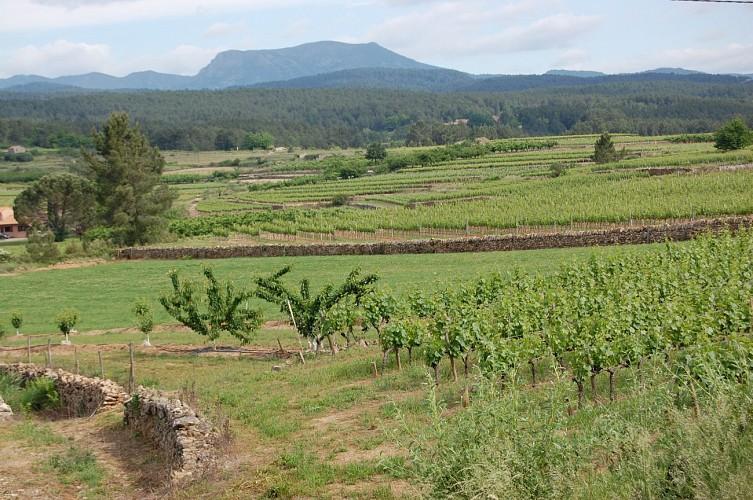 Le sentier des vignes Rosières hiking trail