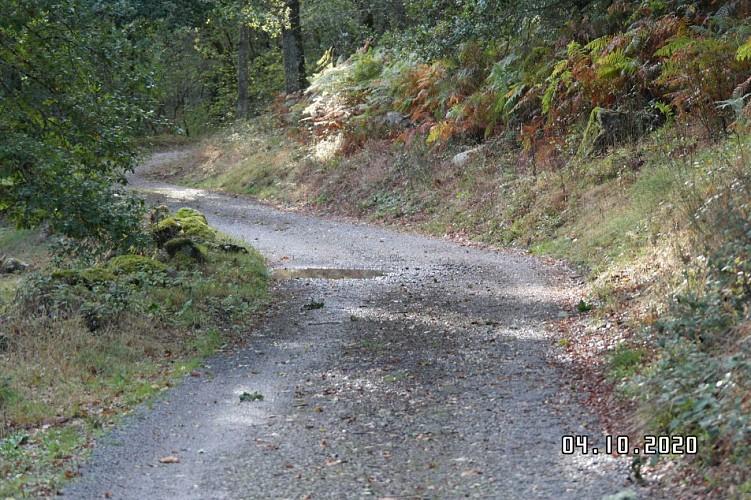field track to gite