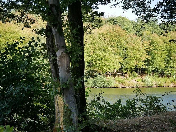 Fourmies - Les étangs des moines