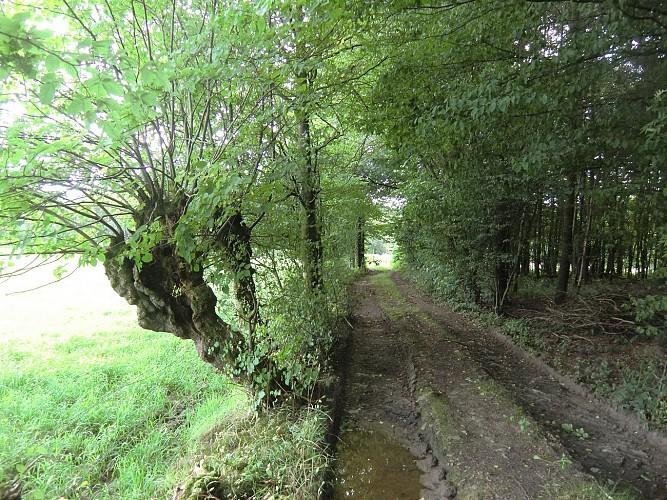 Wignehies sentier nature et paysage