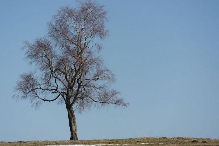 L ' arbre au ciel blue