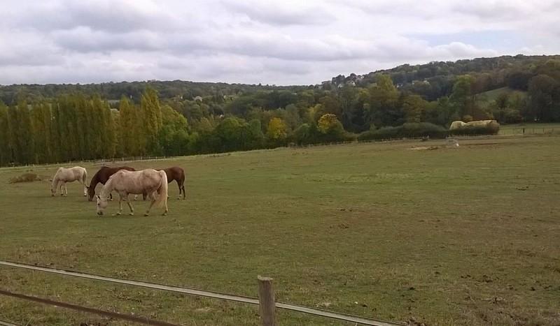 Vallée de la Vaucouleurs et chevaux