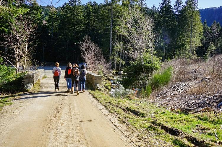 "Sentier "" la Vallée sauvage de Chorsin """