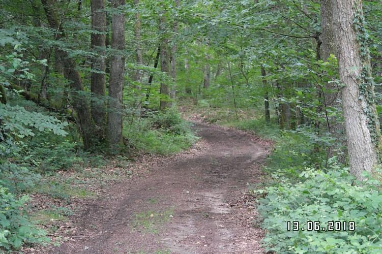 chemin de terre vers l ' étang