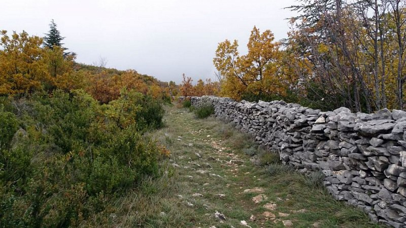 Le Mur de la Peste au Pas du Viguier