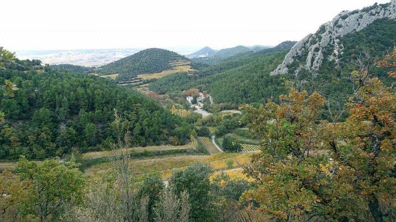 Vignes au Col du Cayron