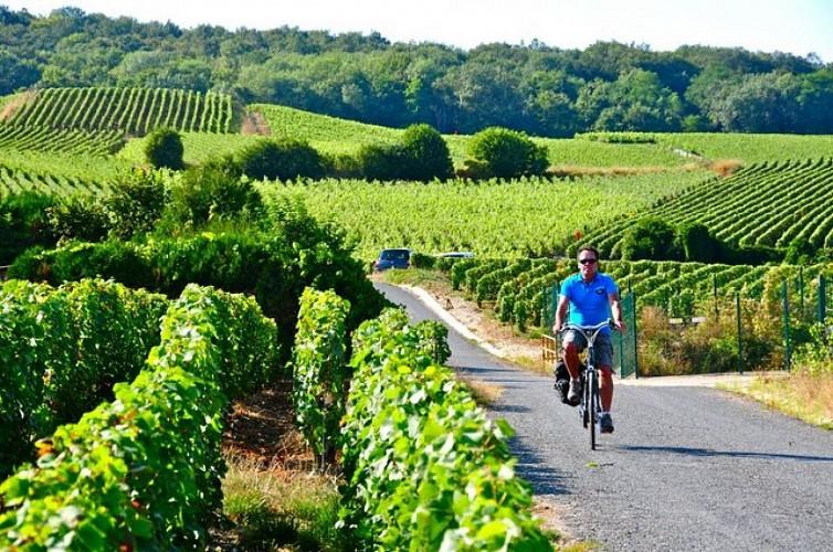 De Reims à Epernay - La Montagne de Reims