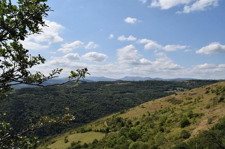 Randonnée : tour de la Pinière