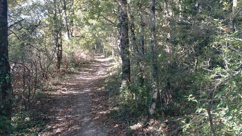 La Forêt de Machecoul-Saint Même