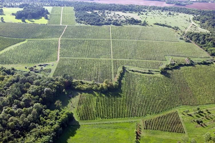 Circuit VTT n°18 - Entre vignes et orchis - Vesoul-Vallée de la Saône