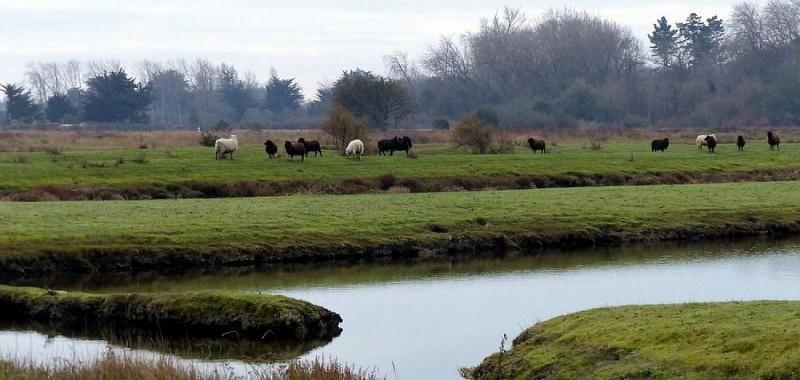 Marais et  réserve ornithologique à L'île d'olonne