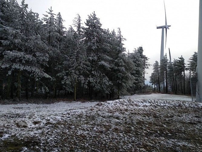 Cabrespine -MontSarrat Trassanel -la grotte des maquisards 2019-01-22