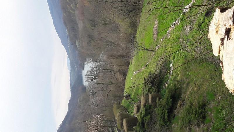 Les Rives Sauvages du Rhône
