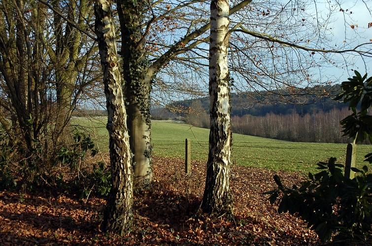 Villers-la-Ville :  A la découverte de 21 arbres remarquables