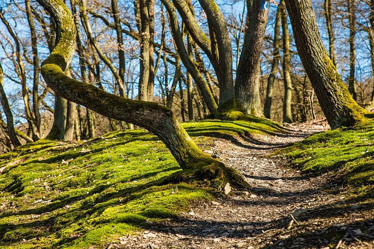 Villers-la-Ville : Montagnes russes dans les bois de Villers (Circuit VerTT)