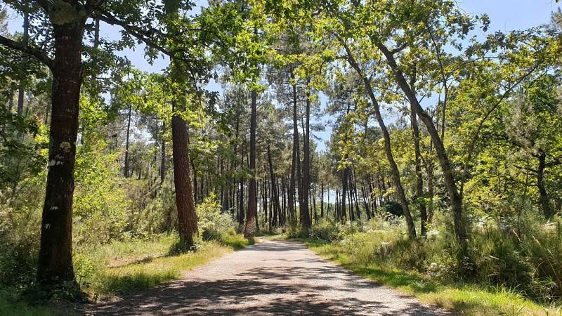 Balade à roulettes : Forêt de Migelane - La balade géologique