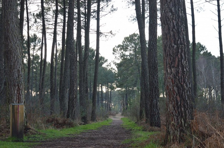 Forêt de Migelane - La balade géologique