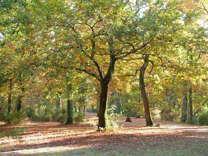 Le parc de la Cheneraie