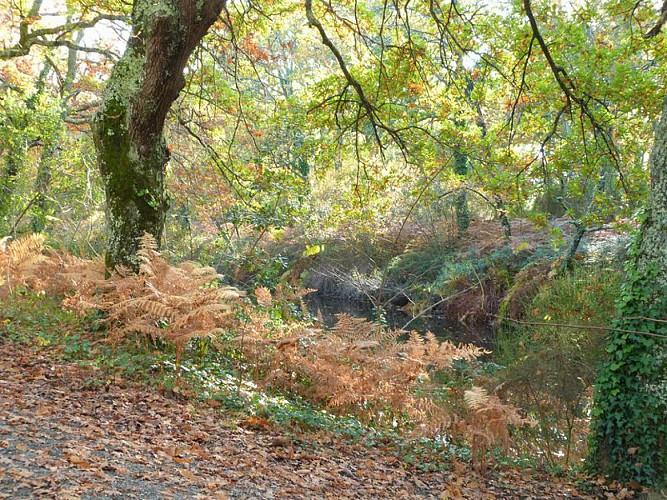 Balade à roulettes : Le parc de la Cheneraie