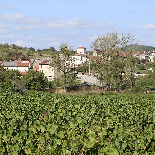 Vignes de Cerdon