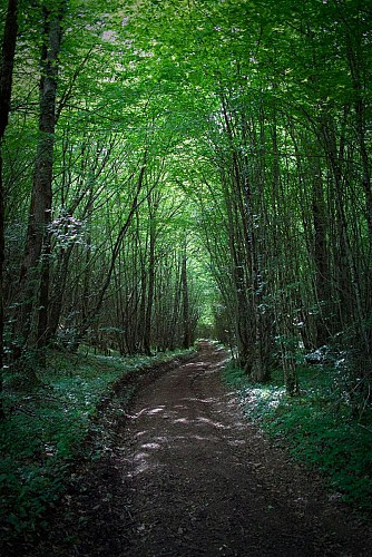 Forêt du Châtillonnais