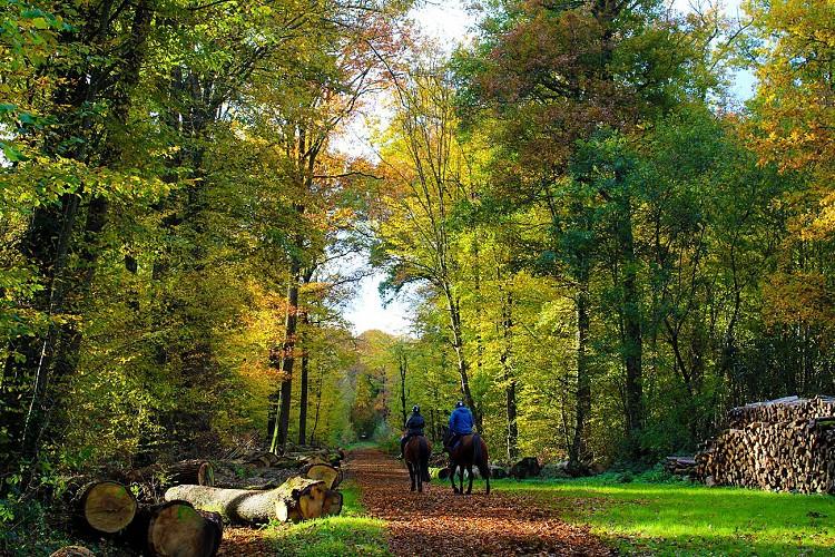 Promenade en forêt de Malvoisine