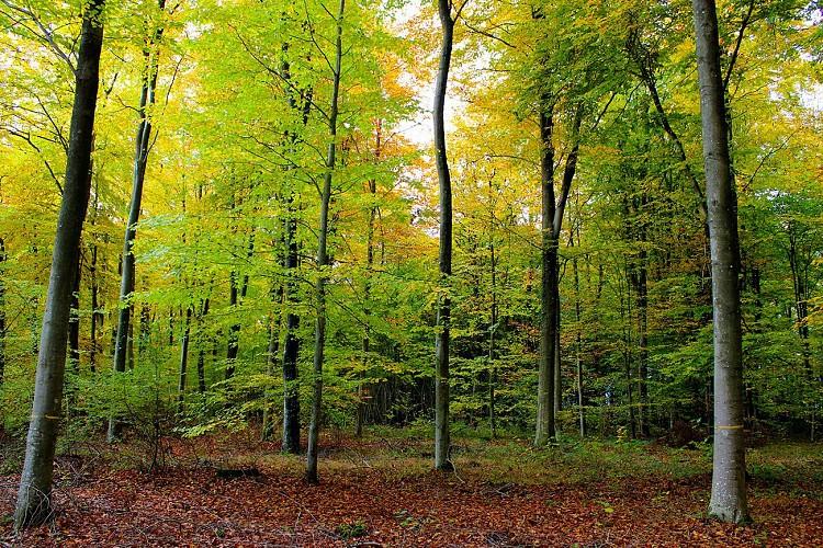 Promenade en forêt de Choqueuse
