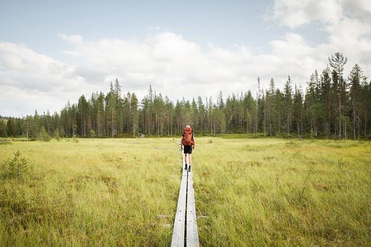 Rando de Riisin Rietas dans le parc national de Riisitunturi en Laponie finlandaise