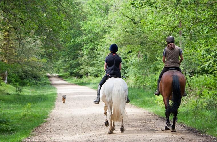 De Bornival (Nivelles) à Ways (Genappe) à cheval