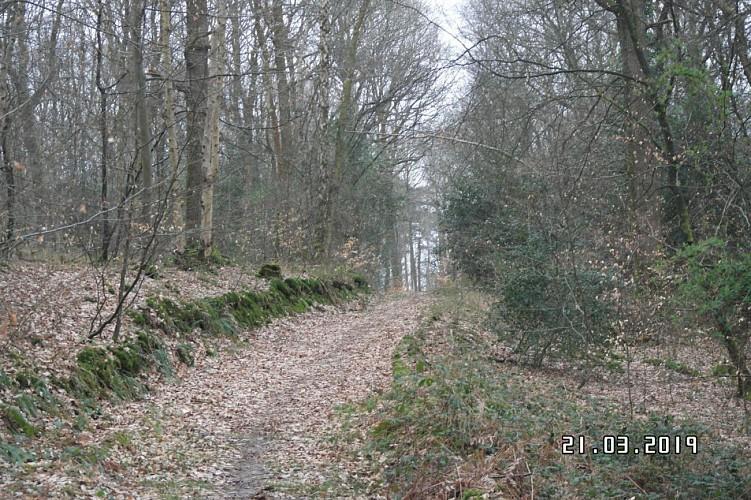 chemin forestiere