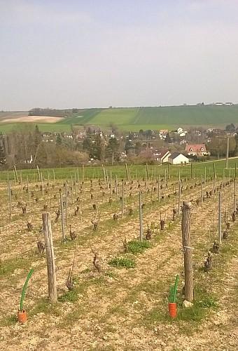 Coteaux de Beynes et son vignoble