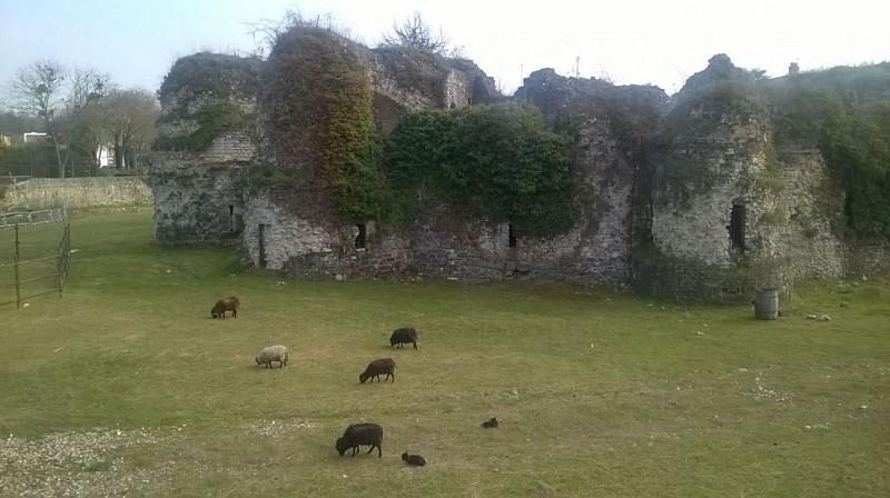 Château de Beynes et éco pâturage