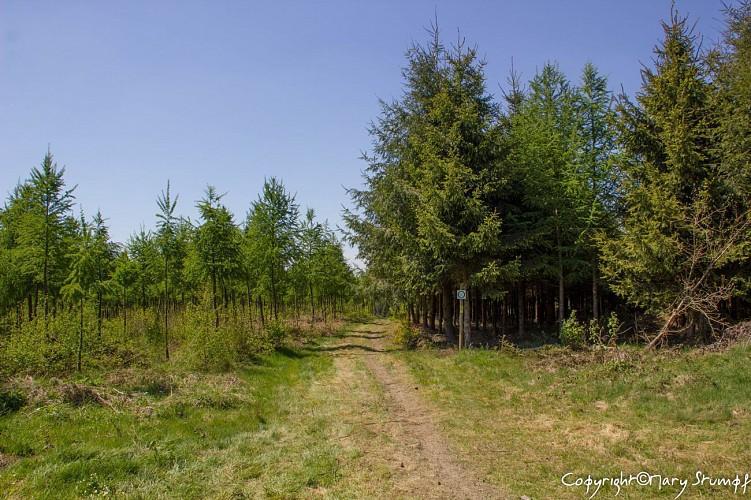 Sentier du bois d'Ospau