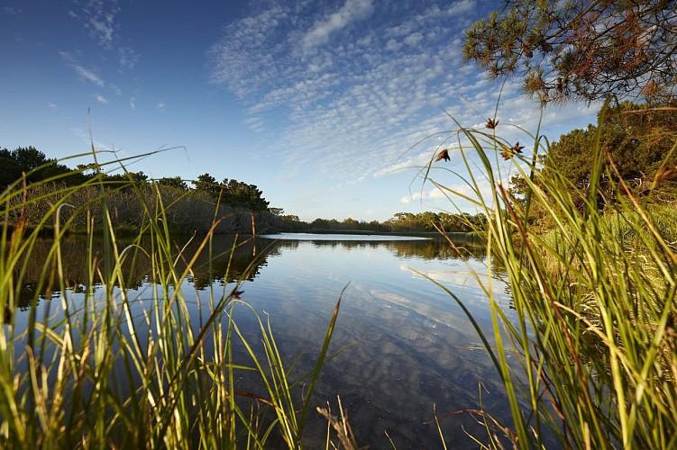 Balade dans le polder de Mousterlin