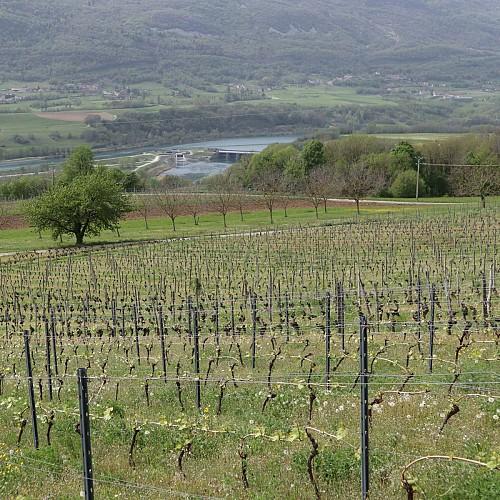 Le Rhône depuis Motz