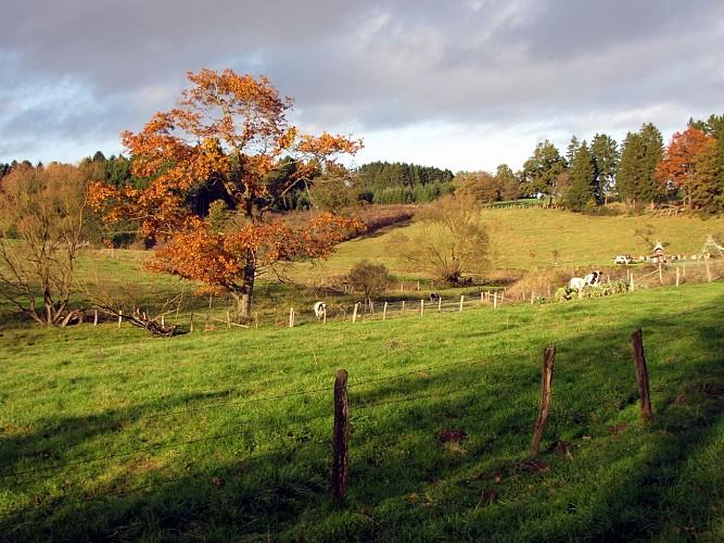 Le sentier écologique des Blancs Bois