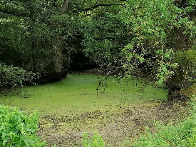Sentier des Bruyère - Saint Hilaire le Vouhis