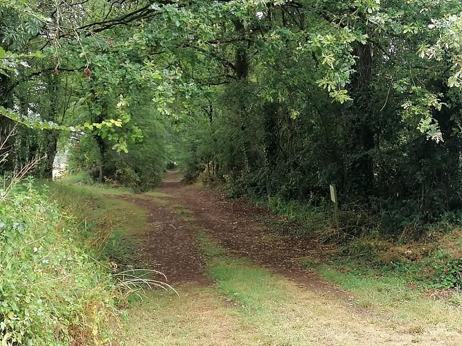 Sentier des Jonquillles - Saint Hilaire le Vouhis