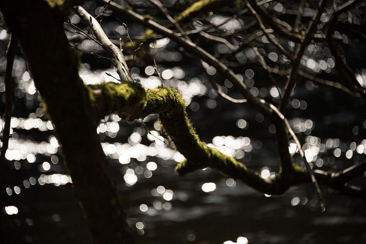 Descente de l'Ourthe en packraft – Ardenne