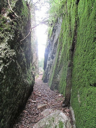 Rochetaillée and Croix de Beauvoir Trails