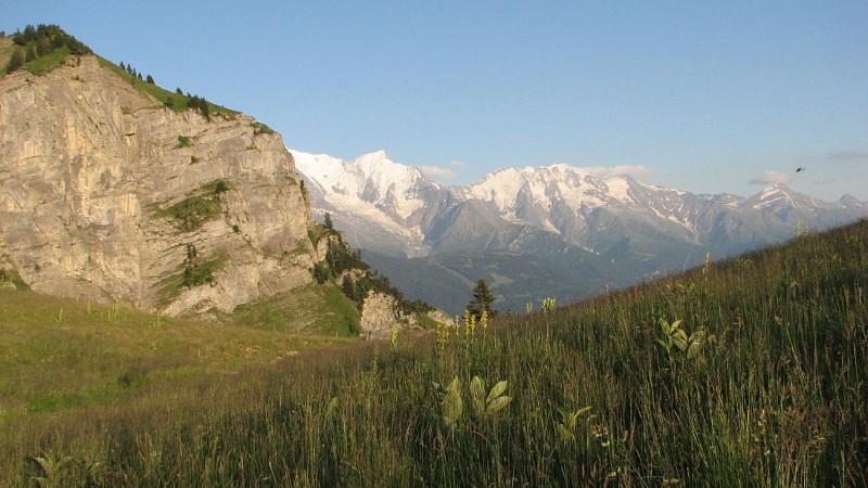 Vue Mont-Blanc depuis le Lachat d'en Haut