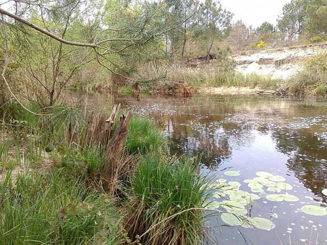 Canal des étangs