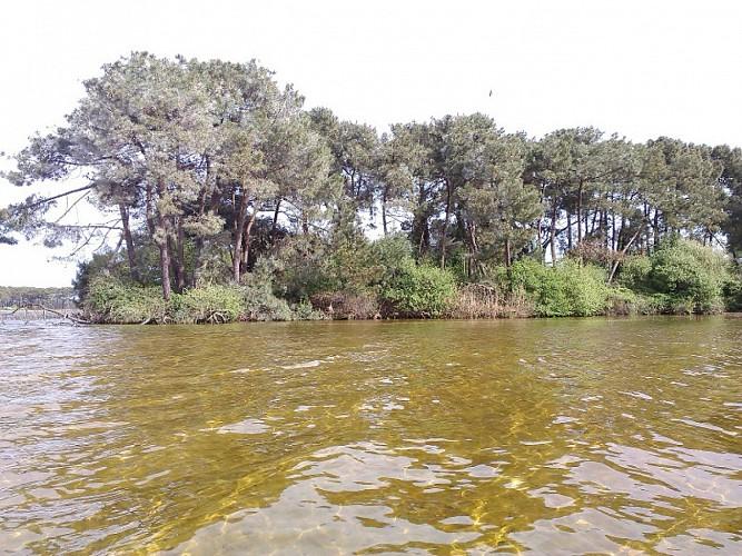 Une des îles des oiseaux sur le lac de Lacanau