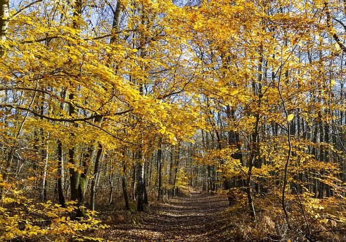 Bois de Rochefort en Yvelines