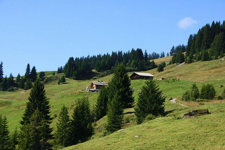 Mountain bike trail n°9 - Plan des dames